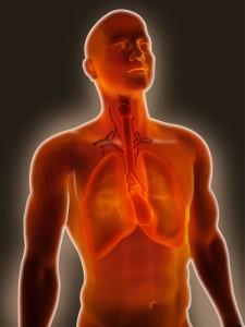IPF and inflammation