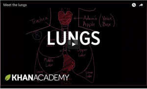 pf lungs