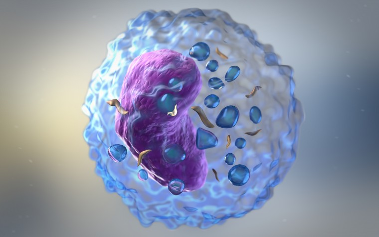 Starving immune system prevents allergic inflammation in lung
