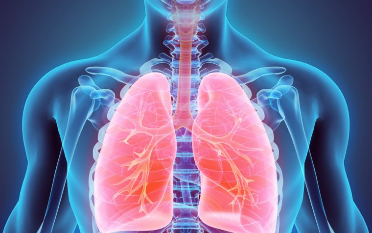 lung fibrosis study