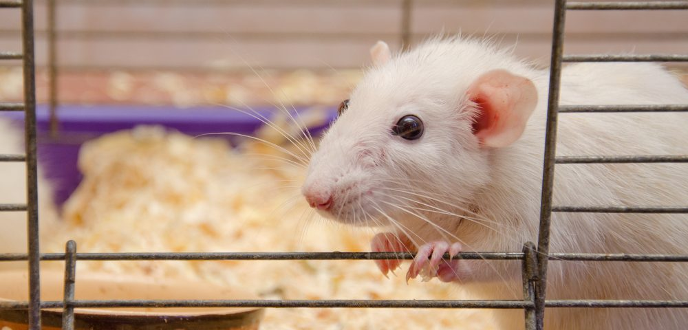 Algernon's Investigational Anti-fibrotic, NP-120, Surpasses Esbriet, Ofev in Reducing Scarred Tissue in IPF Mice