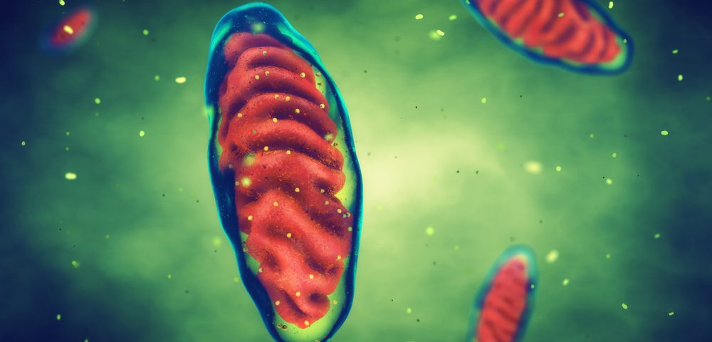 Esbriet Stops Lung Fibrosis By Improving Functioning of Mitochondria, Study Shows