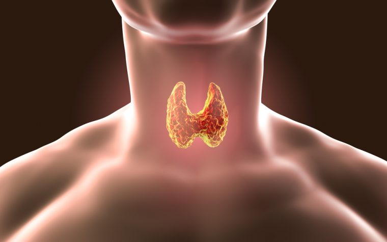 thyroid hormone and IPF