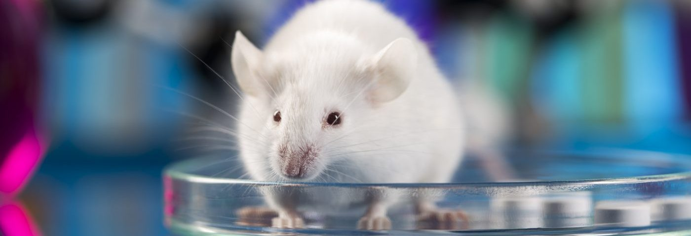 Stem Cells Derived from Amniotic Membrane Slow Lung Scarring in IPF Mouse Model