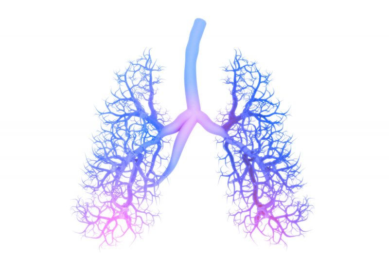 treatments with advanced IPF | Pulmonary Fibrosis News | the human lungs