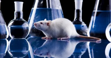 lung development molecule Sox9/Pulmonary Fibrosis News/mouse model in lab image