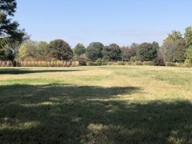recovery \ Pulmonary Fibrosis News \ A snapshot of a field in a park, bordered by trees, where Kevin walked and had his best day during post-transplant recovery.